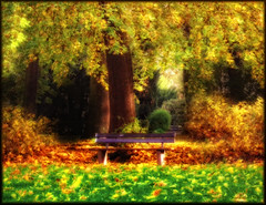 a place in my time (claudia hering (sundance)) Tags: sunlight fall leaves colours afternoon autum framed bank orton bensh