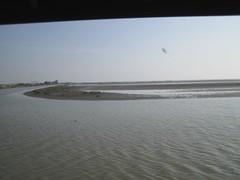 IMG_0335 (xxxbb) Tags: 七股 曾文溪出海口 黑面鵯鷺
