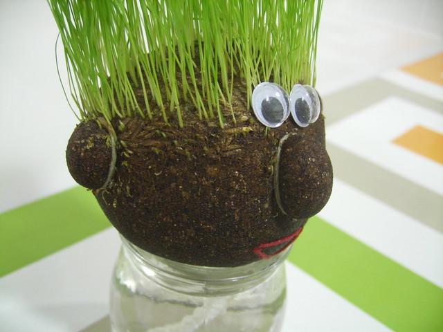 cap d'herba