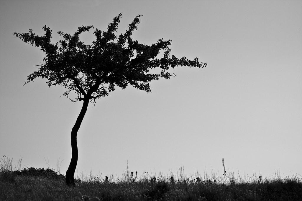 Gargano's Tree