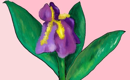 iris' iris