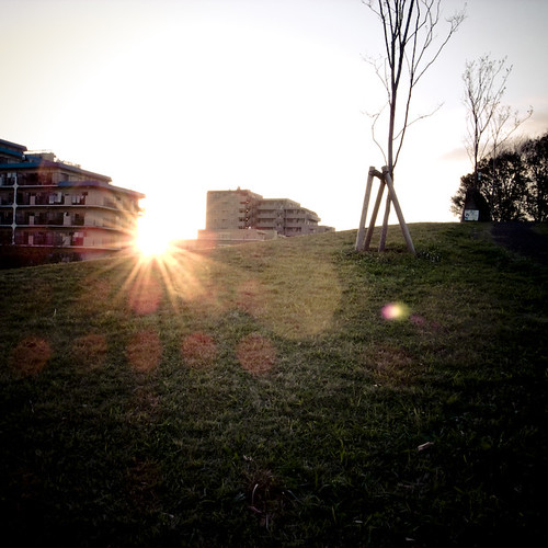 Sun Spots in the Park