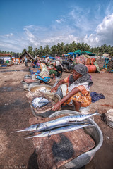 Fish Market at vizhinjam :: HDR