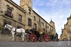 Crdoba (Leo.Villanova) Tags: espaa horse caballo spain espanha carriage cordoba cavalo carruagem frenteafrente nikond300