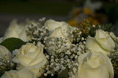 Creme roses (Arjan Gerritsen) Tags: white flower rose photography photo foto fotografie picture roos creme wit bloem afbeelding eos400d