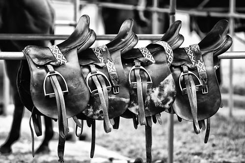 Saddle fitting, Saddle fit, horse tack, Laura Kelland-May, Hunter Judge Canada, Horse Training Ontario,