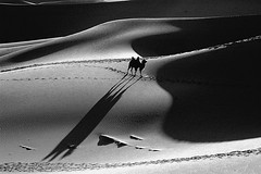 2399 Sand dunes and Camel-- The Gobi Desert ,China (ngchongkin) Tags: china blackandwhite niceshot desert photos camel splash 1001nights nationalgeographic musictomyeyes themoulinrouge inthemood beautifulshot peaceaward flickraward crystalaward mycameraneverlies keepyoureyesopen flickrbronzeaward heartawards artistsoftheyear betterthangoog yourpreferredpicture thebestshot spiritofphotography discoveryphotos 469photographer photographerparadise artofimages fabbow angelawards friendswhocare worldwidetravelog bestpeopleschoice mygearandme theknightandhisprincess artwithoutend fabulousphotographyaward camelsdesertawards reportagediviaggo blackboxsilverhonor photographyforrecreationblackandwhite vivalavidalevel1