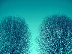 Snowy trees (ambo333) Tags: uk trees england snow tree ice frozen frost beds bedfordshire freeze snowytrees caddington thegreen lu1 hyderoad uksnow meadowway caddingtonvillage frozenbritain