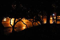 Trees, street light, U District, rainy night, ...