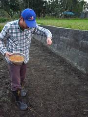 鳳林自然農田 川口由一自然農法的秧田 稻子育苗- 撒稻穀