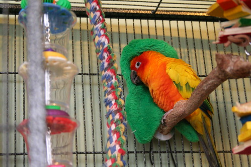 Discount Bird Toys : Bird cages: conure cage setups discount parrot supplies