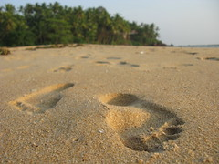Kannur district, Kerala, India, Asia, North-Kerala, Indien, Asien (hn.) Tags: copyright india beach strand sand asia asien heiconeumeyer footprints kerala palmtrees palmtree footsteps palme indien footprint coconutpalm footstep southindia southasia copyrighted palmen coconutpalms kannur kokosnusspalme kokospalme cannanore northkerala coconutpalmtree sdindien coconutpalmtrees fusstapfen sdasien fusabdruck fusabdrcke nordkerala kannurdistrict