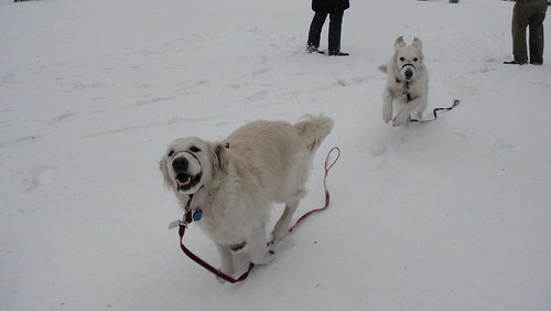 Snowmageddon: Frisket and Sailor