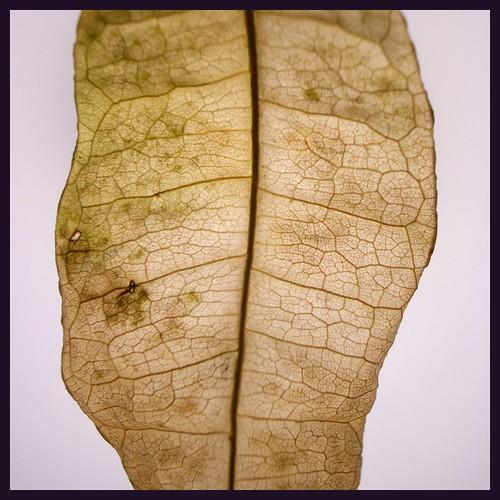 fallen leaf 2