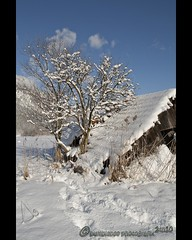 Verfall (mcPhotoArts) Tags: schnee winter snow tree nature germany landscape bayern deutschland bavaria cabin natur cottage htte himmel bluesky wintertime landschaft baum garmischpartenkirchen deterioration naturgewalt forceofnature verfall zerstrung huschen abasement kartpostal canoneos400d impressedbeauty verrottung niedergang sigma1770mm2845dcmacro photoshopcs4 bumblebeephotografix ffgapashow