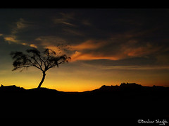 The Lonely Tree of Tnr ! (Bashar Shglila) Tags: world sunset tree sahara silhouette pho