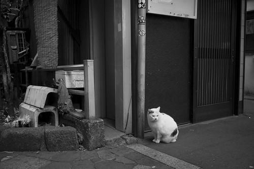 JC0131.105 東京都新宿区歌舞伎町 sn35#