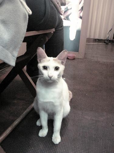 賴在店家不走的流浪貓