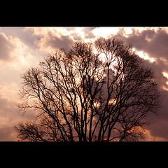 .. (sash/ slash) Tags: travel sunset summer hot tree rain clouds evening sash silhoutte tamilnadu ootty masinagudi sajesh