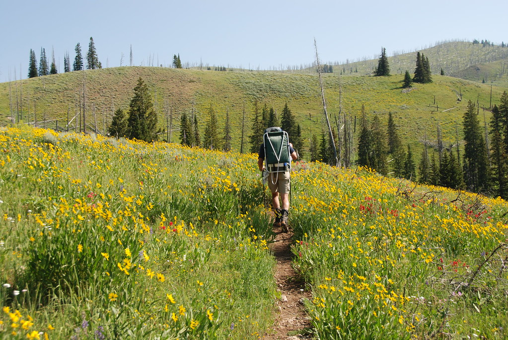Backpacking through the wildflowers