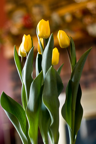 tulips 014-1