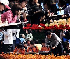 modern or vintage (Clementqc) Tags: life street flower hongkong nikon snap nikkor 80200mm 80200f28d 80200mmf28dafs d700 flowershow2010