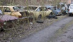 British Leyland Graveyard (Lazenby43) Tags: austin junk rust rover scrapyard maestro sthelens maxi vauxhall 1100 allegro bl sd1