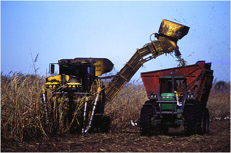 Harvesting sugarcane in south Florida, where scientists in the ARS Sugarcane Production Research Unit are identifying research to help sustain both agriculture and natural Everglades ecosystems.