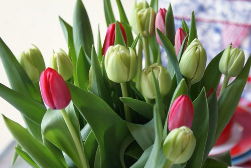 weekend tulips