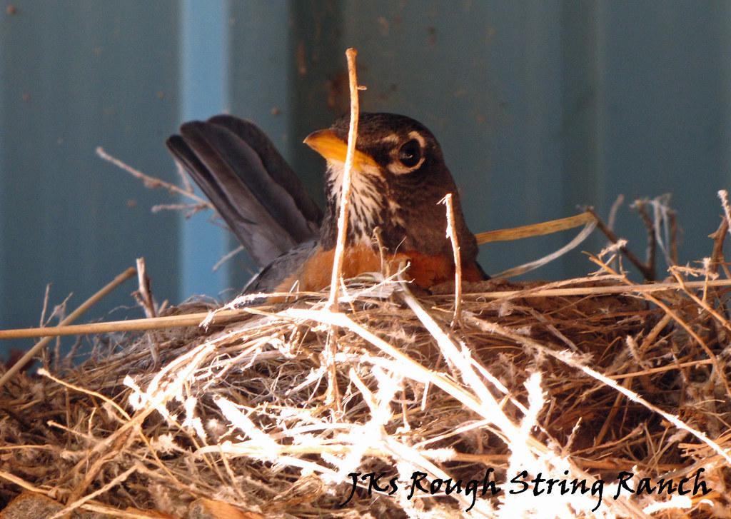 Sittin' the Nest