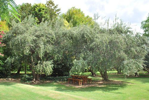Jardim da Vinícola Zuccardi