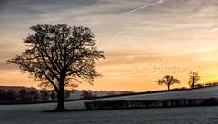 Frosty Sunrise (Explored) (Rafe Abrook Photography) Tags: morning winter sun tree birds sunrise landscape frost flock frosty fields hedges herts lilley abigfave kingswalden lilleybottom breachwoodgreen breachwood