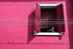 Venise. (julien ( l'ours )) Tags: venise venezia burano canon eos 50d couleur color cat animal fenêtre window venice