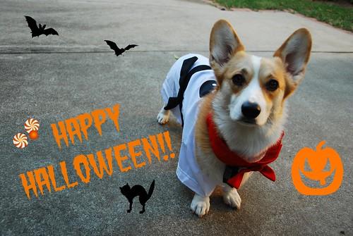 Lucy Karate Halloween