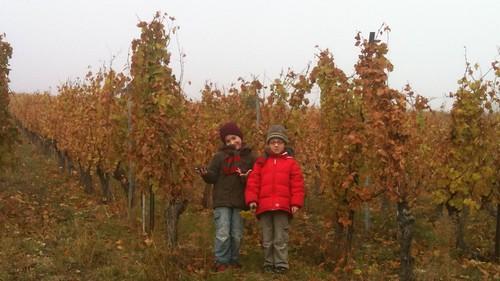Petits vignerons