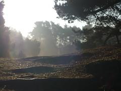 Wanderwege in der Westruper Heide (muensterland) Tags: herbst natur morgen wandern heide mnsterland haltern westruperheide