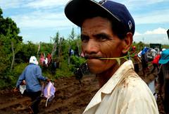 Siembra de chile en el Walamo (pedrografo) Tags: chile méxico pedro guevara sinaloa mazatlán siembra walamo