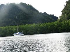 Mangrove Tour, Langkawi by pankaj.batra