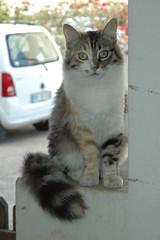 Sono molto curiosa..... (virgiliomulas.) Tags: maddalena gatti gatta naturesfinest curiosit nonnamaria virgilio supershot accoglienza compagna starebene miccia dolcecasa gattononpicampagnolo amicideglianimali virgiliocompany vg~catsgallery