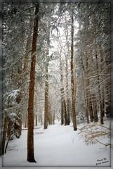 Santa Fe, Ski Area (kristi_Nikon_D1X) Tags: trees snow newmexico santafe explore nm winterwonderland