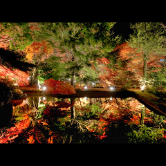 逆さ紅葉 2009 (whc7294) Tags: autumn reflection nightshot 紅葉 hdr photomatix ライトアップ 10faves artistsoftheyear platinumheartaward nikond300 曽木公園 1424mmf28