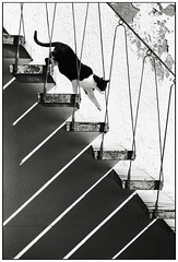 remembering max (kirsten t) Tags: shadow film stairs cat 35mm nikon f90 sw thecatwhoturnedonandoff