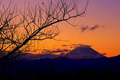 Gradient Sunrise (TheJbot) Tags: mountain japan sunrise landscape 50mm fuji mount persimmon 柿 hdr