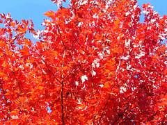 Fall Colors Boulder   DSCN0269