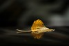 balance:  354/365 (helen sotiriadis) Tags: black macro reflection car yellow closeup canon leaf published dof bokeh depthoffield explore 365 frontpage carlsagan canonef100mmf28macrousm canoneos40d toomanytribbles