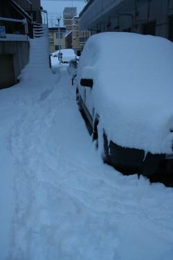 雪 (5).JPG