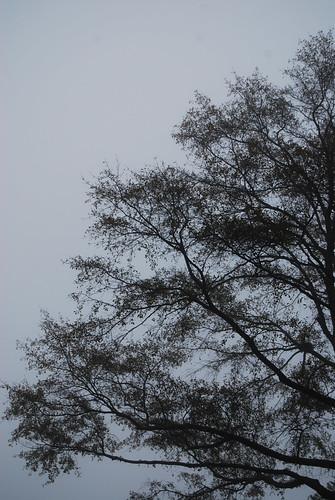 SS51_Foggy[2009]