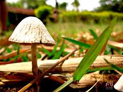 Cogumelo (Fernando Paes) Tags: paisagem grama cho cogumelo terra