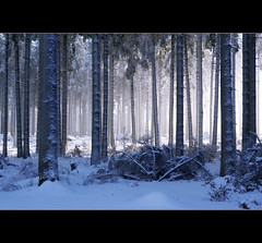 Misty winter (motivsucher) Tags: wood schnee winter snow cold fog forest nebel kalt wald sauerland niedersfeld