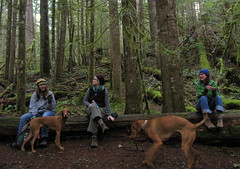 log lounge (carolyn_in_oregon) Tags: oregon hiking kate andrea vizsla mthood salmonriver gus camille zigzag sprewell spre salmonhuckleberrywilderness